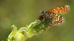 Butterfly drink morning waterdrops Stock Footage