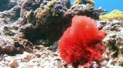 Stunning colorful coral reefs. Stock Footage