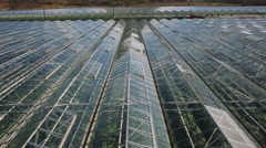 Large industrial greenhouses Stock Footage