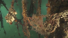 Underwater diving with rusty old submarine fishing nets overgrown with mussels Stock Footage