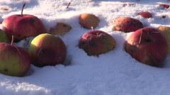 Snow covered red apples covered with snow in the meadow Stock Footage