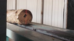 Lumber industry - Pine logs moving through the pipeline. - stock footage