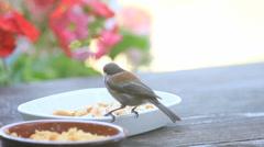 Chickadee chooses a peanut Stock Footage