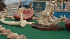 Gift Items of Skull and Bones in National Reserve on a Table Closeup Stock Footage