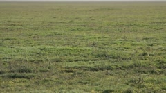 Carpet of Grass on Field That Goes Beyond the Horizon Stock Footage