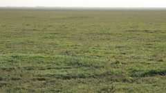 Carpet of Grass on a Field That Goes Beyond the Horizon Panorama From Left to Stock Footage