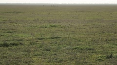 Carpet of Grass on a Field That Goes Beyond Horizon Stock Footage