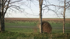 Tumbleweeds Stuck at Base of the Tree in Field Stock Footage