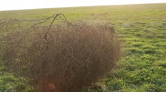 Tumbleweed is Rolling Through the Field Closeup Stock Footage