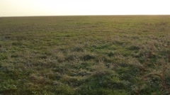 Tumbleweed is Rolling Across the Field Closeup Stock Footage