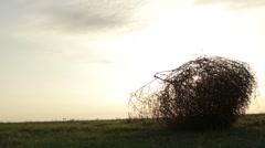 Tumbleweed Stood on the Grass at Sunrise Stock Footage