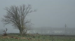 Bare Tree on Background of a Large Warehouse Covered With a Dense Fog Stock Footage