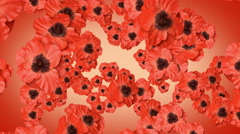 Red poppies. With an alpha matte. - stock footage