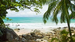 Coconut palm on exotic, tropical beach with boulders Stock Footage