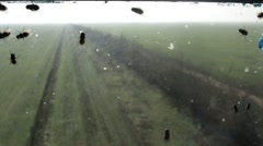 Flies Creep on Glass Windows Overlooking Field Outgoing Into Distance Stock Footage