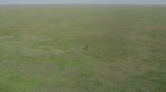 Man Playing With the Puppy on the Grass Top View From Height Stock Footage