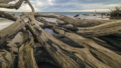 4K Motion Timelapse Driftwood Beach Stock Footage