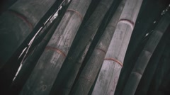 Tilt Up View To Bamboo Tops Stock Footage