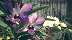 Orchid Flowers in Greenhouse - stock footage