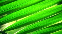 Dolly Shot of Palm Leaf in Sunlight Stock Footage