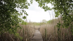 Spring morning long fishing bridge through the reeds on the lake Stock Footage