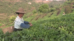 China Tea plantation local farmer Stock Footage