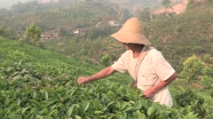 China Tea plantation farmer Stock Footage