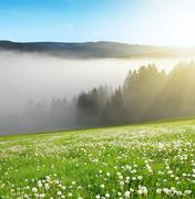Morning haze in the National park Sumava Stock Photos