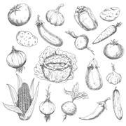 Healthy food sketch design with fresh vegetables Stock Illustration