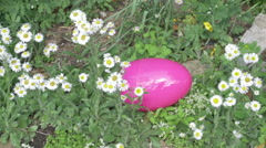 Giant easter egg in garden plants plant greenery Stock Footage