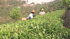 China Tea plantation local farmers Stock Footage