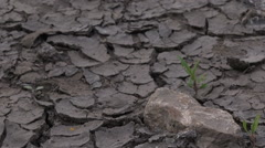 Soil drought, cracks in dry land, dolly slider Stock Footage