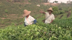 China tea plantation picking up local farmers couple Stock Footage