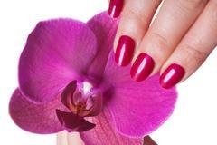 Manicured nails caress dark pink flower pedals - stock photo