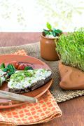 Home-grown garden cress as healthy vitamin supplier Stock Photos