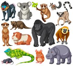 Different type of wildlife animals on white background - stock illustration
