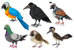 Different kind of wild birds - stock illustration