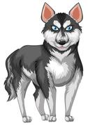 Siberian husky with black and white fur Stock Illustration