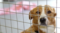 A dog in his pen at a local dog and cat shelter. Stock Footage