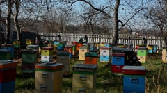 Bees and bee products Stock Footage
