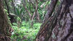 Untouched Hawaii, Tropical jungle at lands end Stock Footage