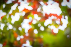 natural background, green and orange leaf of autumn, abstract blurred defocus - stock photo