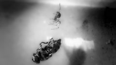 Predator. Spider and its prey in B&W Stock Footage