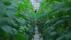 People in a greenhouse Stock Footage