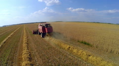Combine working on the wheat field Stock Footage