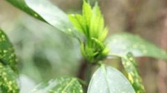 Flower germinating in a botanical garden, slider shot Stock Footage