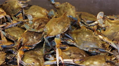 Live crabs at a fish market  Stock Footage
