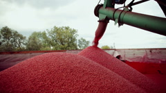 Process of mordant seeds with fungicides to protect against diseases. - stock footage