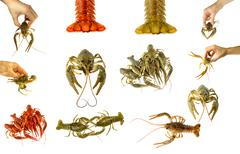 collage of isolated crayfish on white background. - stock photo