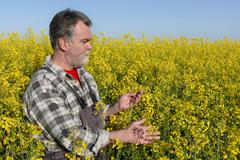 Farmer in blossoming canola, oil seed field Stock Photos